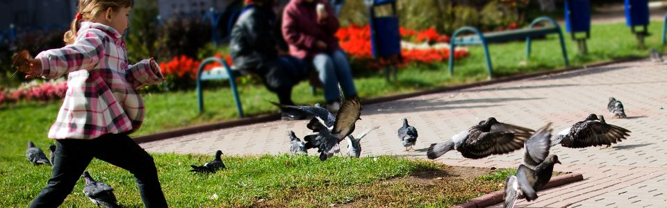 Girl chasing pigeons in a park